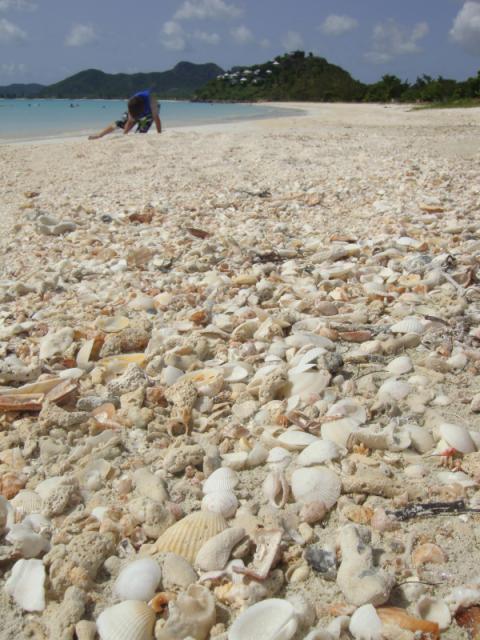 Shells on Valley Church Beach