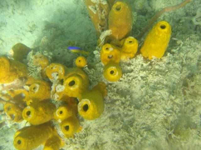 Sponges and a fish